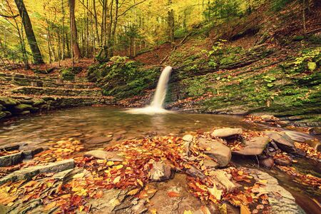 Autumn mountain waterfall stream in the rocks with colorful red fallen dry leaves, natural seasonal background. Lumshory, Transcarpathia, Ukraine