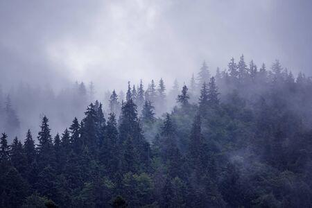 Paesaggio di montagna nebbioso nebbioso con foresta di abeti e copyspace in stile vintage retrò hipster Archivio Fotografico