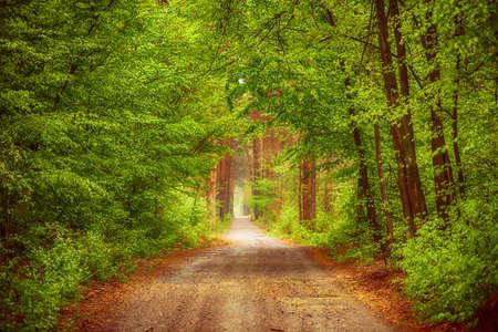 Summer green forest Stock fotó