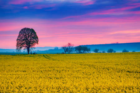 Sunrise and rapeseed Banque d'images