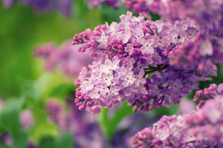 Spring lilac flowers Stok Fotoğraf - 161113168