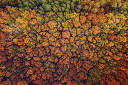 Autumn forest from above Stok Fotoğraf - 161113169