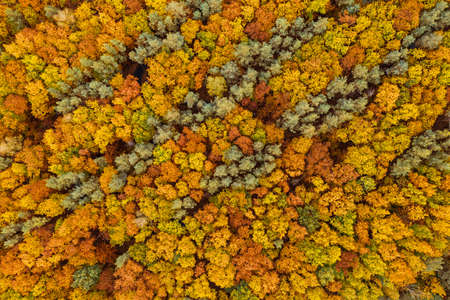 Autumn forest from above Stok Fotoğraf - 161113171