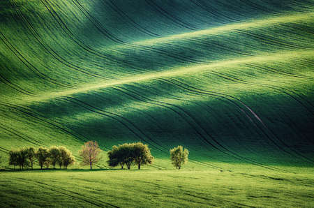 Green grass field background Stok Fotoğraf - 160747017