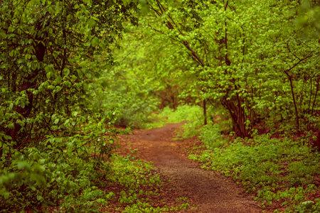 Summer green forest Stok Fotoğraf - 160747019