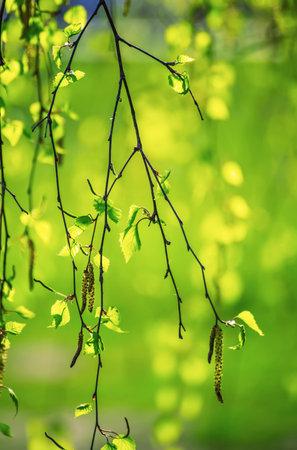 Spring birch branches Stok Fotoğraf - 160711931