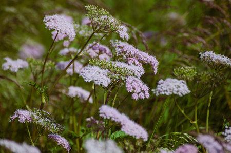 Spring white flowers 스톡 콘텐츠