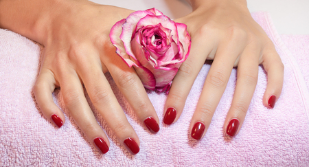 Woman hands with red manicure holding pink rose photo