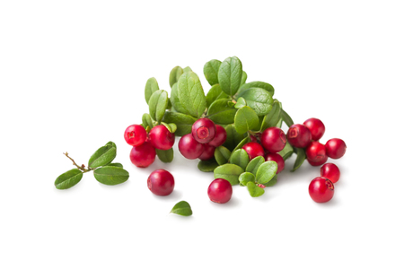 Wild Cowberry foxberry, lingonberry with leaves isolated on white.