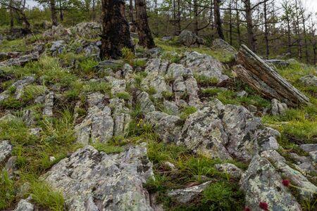 tunka range: Dark coniferous taiga in a mountain