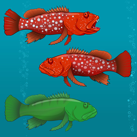 underwater fishes: Common Harlequin Fish, cartoon Vector illustration for artwork in small sizes. Illustration