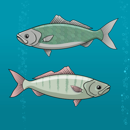 aquaculture: Common Dace. roach cartoon Vector illustration for artwork in small sizes.
