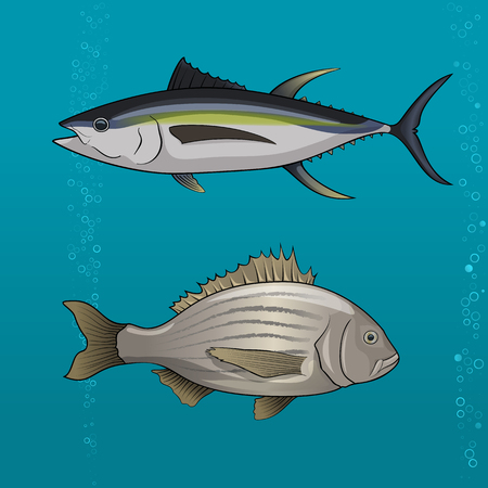 underwater fishes: Common tune and seabream, dorado, cartoon Vector illustration for artwork in small sizes. Illustration