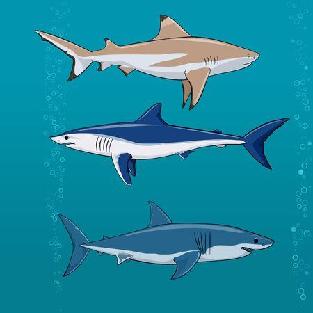 aquaculture: Common sharks set Vector illustration Stock Photo