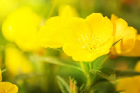 Beautiful Yellow flowers Archivio Fotografico