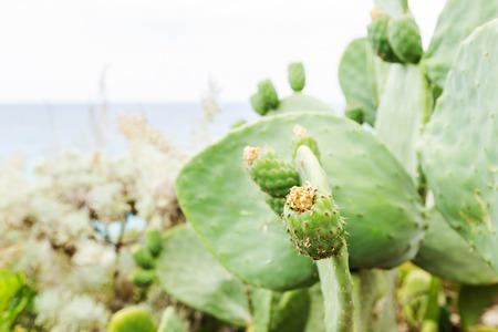 Fresh succulent cactus