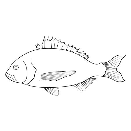 Coloring book for children, dorado seabream fish