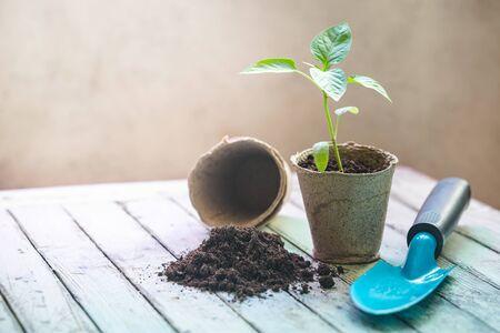 Seedlings in organic pots