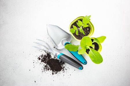 Gardening tools, seedlings and fertile soil on white background seen from above, top view. Gardening or planting concept.