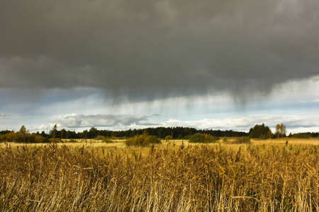 Agricultural field with wheat crop under a dramatic sky just before a thunderstorm