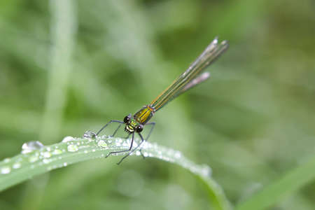 imago: Dragonfly macro shot in nature. Shallow depth of field.
