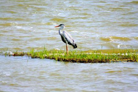 heron,yala, Sri Lanka Stock Photo