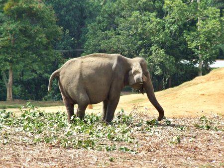 disable elephant Stock Photo