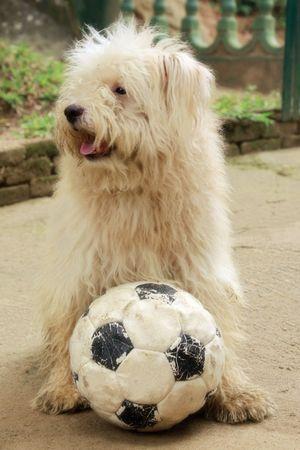 spunky: dog and ball Stock Photo