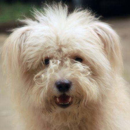 spunky: doge face