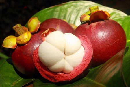 beautyfull mangosteen fruit Stock Photo