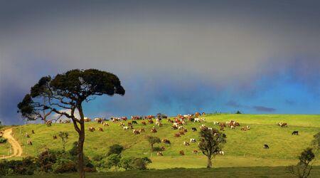 contryside: contryside farm in Sri Lanka Stock Photo