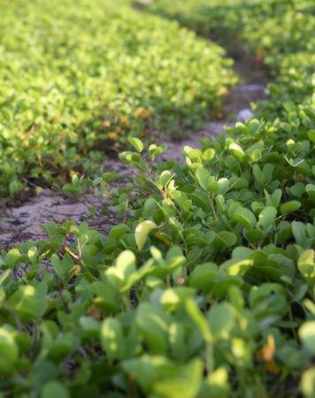 bush near sea Stock Photo