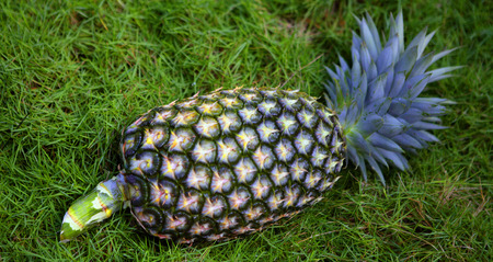 pinapple on a grass