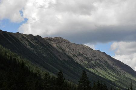 Treeline on a mountain Stock Photo