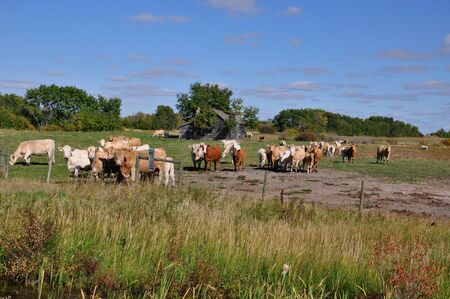 Curious cows in a pasture