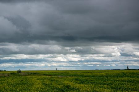 canola crops under cloud cover, Saskatchewan, Canada.