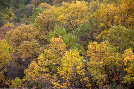 Group of trees turning color in Autumn