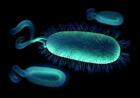 pylori: This Gram-negative bacillus bacterium is curved (as here) or spiral in shape, with flagellae for motility. Here, many hair-like flagellae are visible. Colonies of H.pylori occur on the stomach mucous membrane in people suffering gastritis, and this bacter Stock Photo
