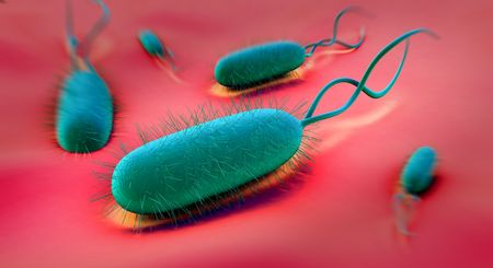 bacillus: This Gram-negative bacillus bacterium is curved (as here) or spiral in shape, with flagellae for motility. Here, many hair-like flagellae are visible. Colonies of H.pylori occur on the stomach mucous membrane in people suffering gastritis, and this bacter Stock Photo