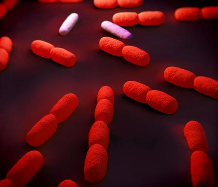 bacterial meningitis: Listeria Bacteria, artwork