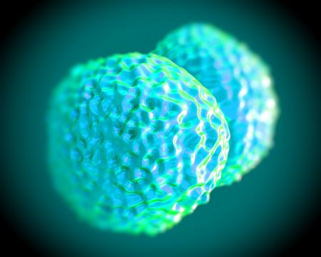 bacterial meningitis: Neisseria meningitidis bacteria