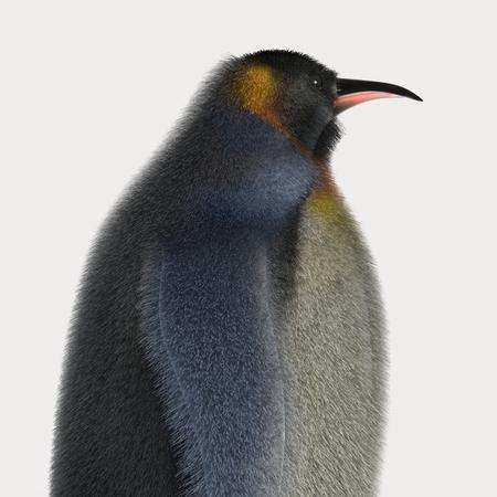 Emperor penguins , cartoon penguins , 3d render penguins isolated on white background photo