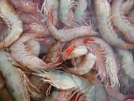 pike place market: closeup on Asian prawns in a market place