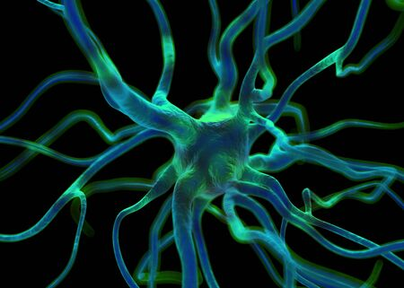 stimulate: Neuron or nerve cells which form part of the nervous system which process and transmit information by electrical and chemical signalling.