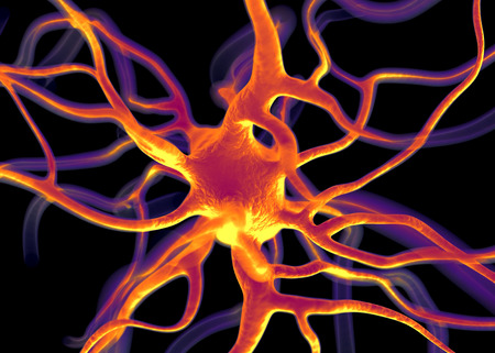 nerve: Neuron or nerve cells which form part of the nervous system which process and transmit information by electrical and chemical signalling.