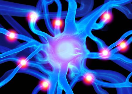 Neuron or nerve cells which form part of the nervous system which process and transmit information by electrical and chemical signalling.