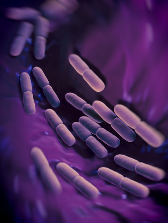 lactic: Lactobacillus bulgaricus bacteria. They are rod-shaped, gram-positive bacteria. They grow in acid media & produce lactic acid from the fermentation of carbohydrates. Lactic acid produced by the fermentation of milk is responsible for the preservation & fl