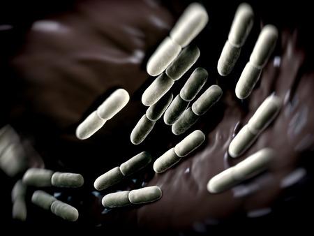 bacterias: Bacterias Lactobacillus bulgaricus. Ellos son en forma de barra, las bacterias gram-positivas. Crecen en medio �cido y producen �cido l�ctico a partir de la fermentaci�n de hidratos de carbono. El �cido l�ctico producido por la fermentaci�n de la leche es responsable de la preservaci�n y fl Foto de archivo