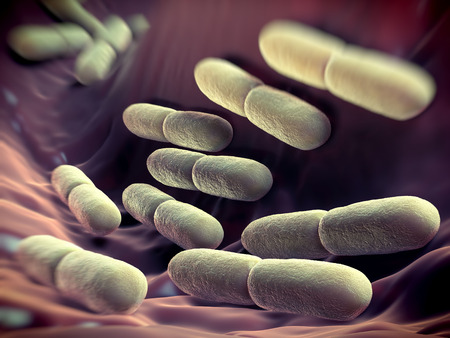 Lactobacillus bulgaricus bacteria. They are rod-shaped, gram-positive bacteria. They grow in acid media & produce lactic acid from the fermentation of carbohydrates. Lactic acid produced by the fermentation of milk is responsible for the preservation & fl