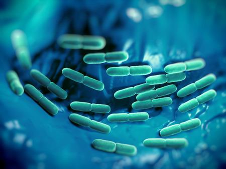 yogur: Bacterias Lactobacillus bulgaricus. Ellos son en forma de barra, las bacterias gram-positivas. Crecen en medio �cido y producen �cido l�ctico a partir de la fermentaci�n de hidratos de carbono. El �cido l�ctico producido por la fermentaci�n de la leche es responsable de la preservaci�n y fl Foto de archivo
